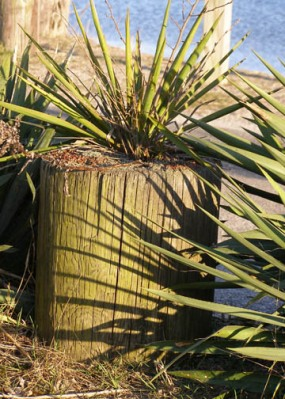 Yucca Shadows on Post