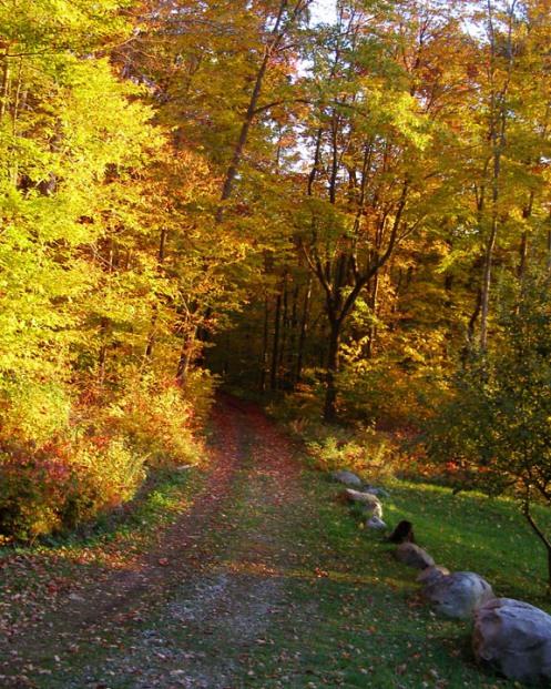 Fall Driveway