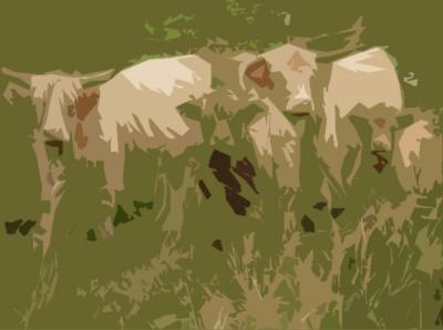 LongHorn Cattle2 cutout