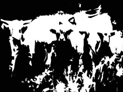 LongHorn Cattle2 tornedges