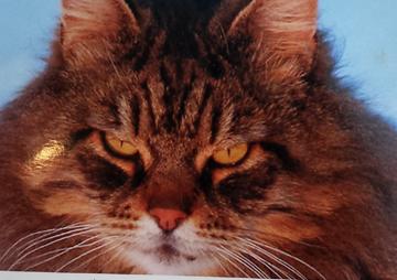 Cat Eyes3