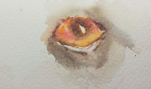 Dog Eye 101C