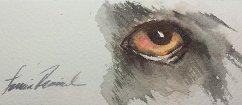 Dog Eye 101E