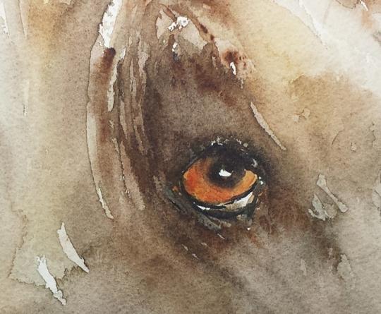 Dog Eye 101H