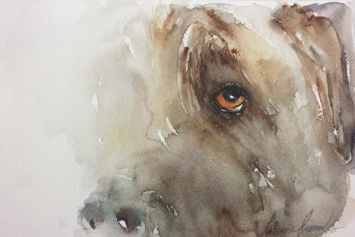 Dog Eye 101I