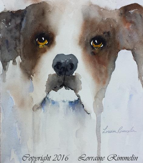 washes-animal-face-3