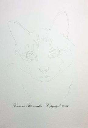 Cat Charlie2